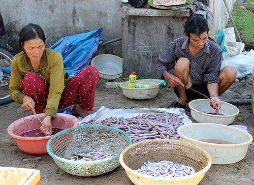 Người dân lại xới tung bãi biển tìm địa sâm bán cho thương lái Trung Quốc - Ảnh 1