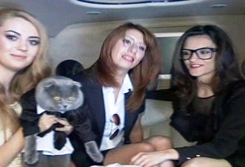 Sốc: Mèo làm giám đốc truyền thông, có xe sang limousine đi làm - Ảnh 3