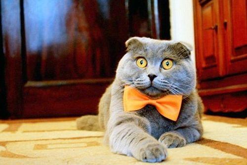 Sốc: Mèo làm giám đốc truyền thông, có xe sang limousine đi làm - Ảnh 1