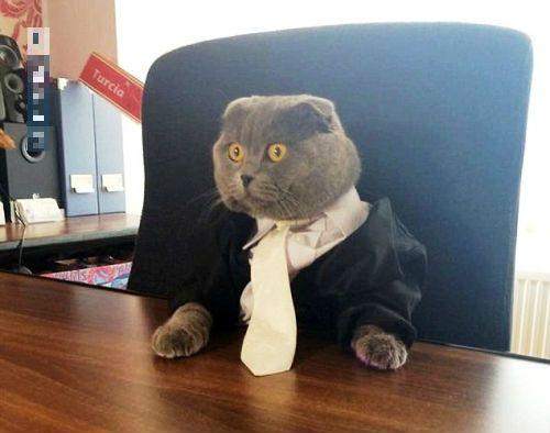 Sốc: Mèo làm giám đốc truyền thông, có xe sang limousine đi làm - Ảnh 2