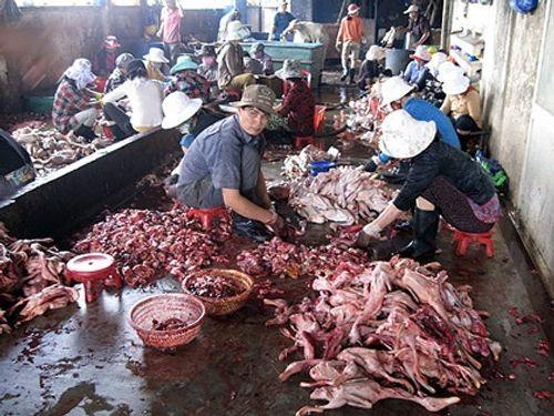 Thực phẩm bẩn: Dùng cả xe Camry để chở gà thải loại về Hà Nội - Ảnh 2