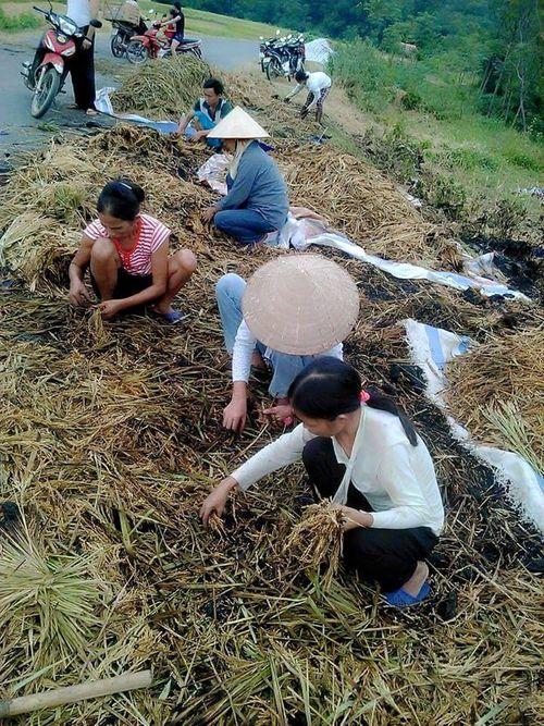 Phẫn nộ nhóm thanh niên thiêu rụi lúa vừa gặt của nông dân - Ảnh 1