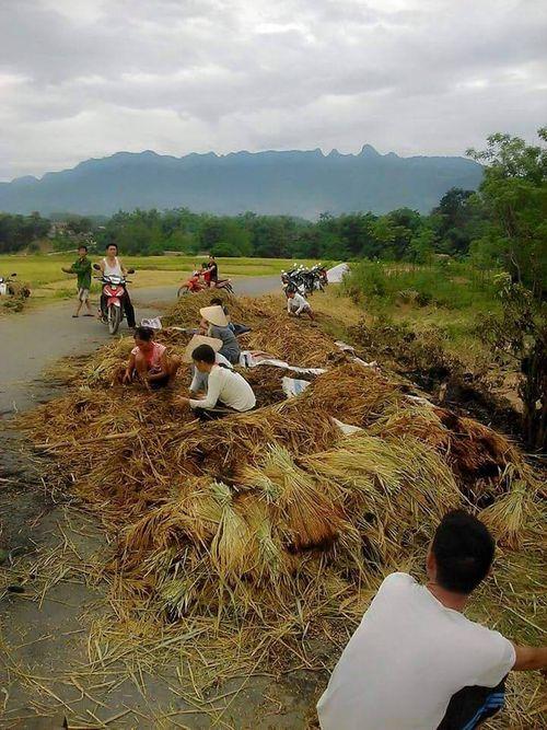 Phẫn nộ nhóm thanh niên thiêu rụi lúa vừa gặt của nông dân - Ảnh 2