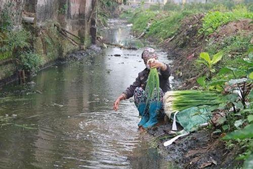 Rùng mình người dân rửa rau bằng nước phân rồi đem bán - Ảnh 2