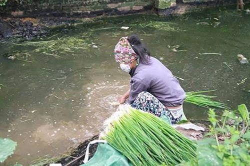 Rùng mình người dân rửa rau bằng nước phân rồi đem bán - Ảnh 4