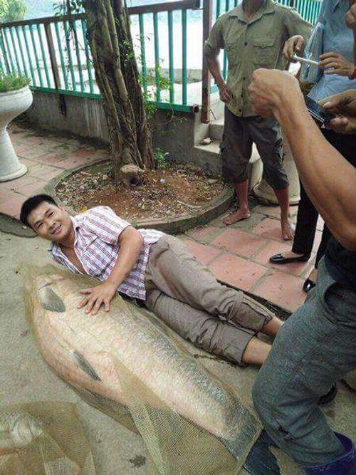 Thái Nguyên: Bắt được cá khủng nặng tới 52kg - Ảnh 1