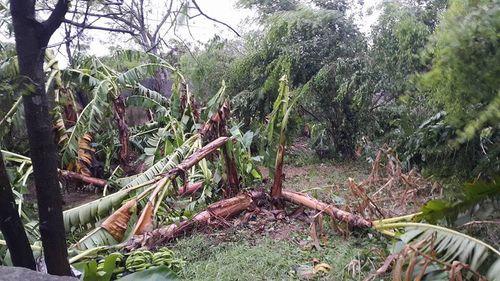 Tin bão số 1 mới nhất: Thiệt hại ở các tỉnh ven biển miền Bắc - Ảnh 2