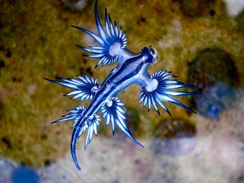 Xuất hiện sinh vật biển tự phát ra ánh điện màu xanh kỳ lạ - Ảnh 3