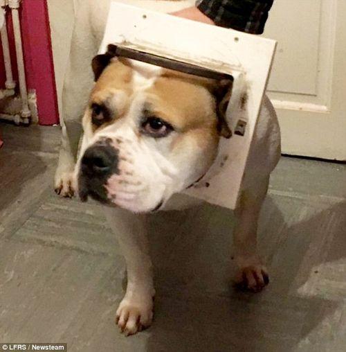 Chú chó cố chui qua lỗ cửa dành cho mèo và cái kết bất ngờ - Ảnh 1