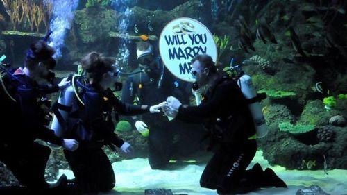 Màn cầu hôn bất ngờ trong bể cá mập - Ảnh 1