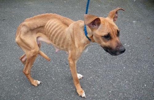 """Chú chó biến thành """"xác ướp"""" vì bị chủ tàn nhẫn bỏ đói - Ảnh 3"""