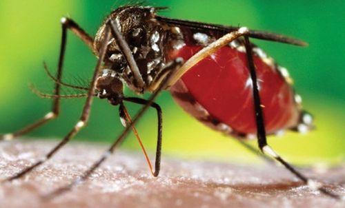 Rùng mình biến chứng đáng sợ của bệnh sốt xuất huyết - Ảnh 1
