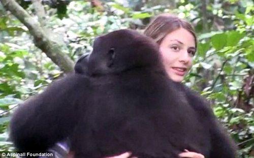 Cuộc hội ngộ xúc động của cô chủ nhỏ và chú khỉ đột sau 12 năm xa cách - Ảnh 2