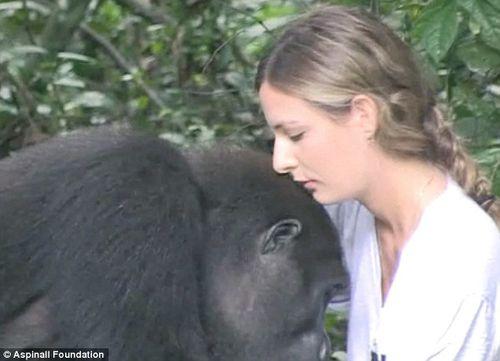 Cuộc hội ngộ xúc động của cô chủ nhỏ và chú khỉ đột sau 12 năm xa cách - Ảnh 3