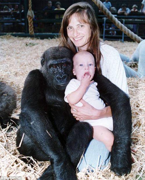 Cuộc hội ngộ xúc động của cô chủ nhỏ và chú khỉ đột sau 12 năm xa cách - Ảnh 5