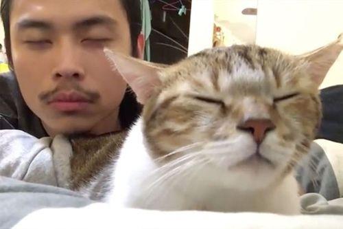Hài hước chú mèo nhắm mắt và lắc đầu theo điệu nhạc Hotline Bling - Ảnh 2