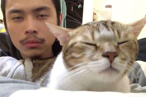 Hài hước chú mèo nhắm mắt và lắc đầu theo điệu nhạc Hotline Bling - Ảnh 1