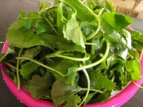 Công dụng và tác hại bất ngờ của rau má - Ảnh 3