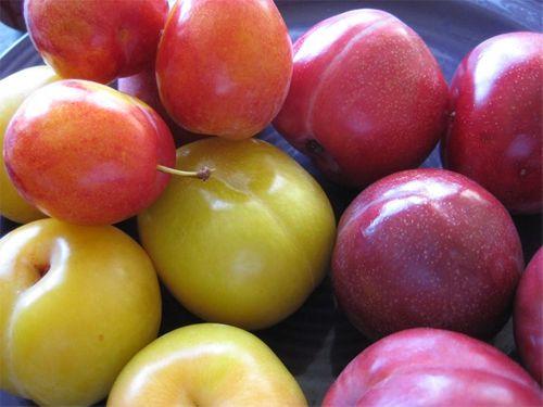 Những mối nguy hại cần biết khi ăn một số loại trái cây mùa hè - Ảnh 1