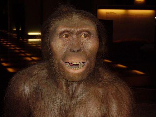 Phát hiện loài tổ tiên mới của con người - Ảnh 2