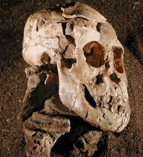 Phát hiện loài tổ tiên mới của con người - Ảnh 3