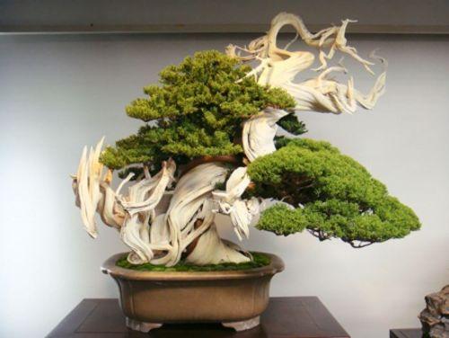 Ngất ngây trước những kiệt tác Bonsai nổi tiếng thế giới - Ảnh 2