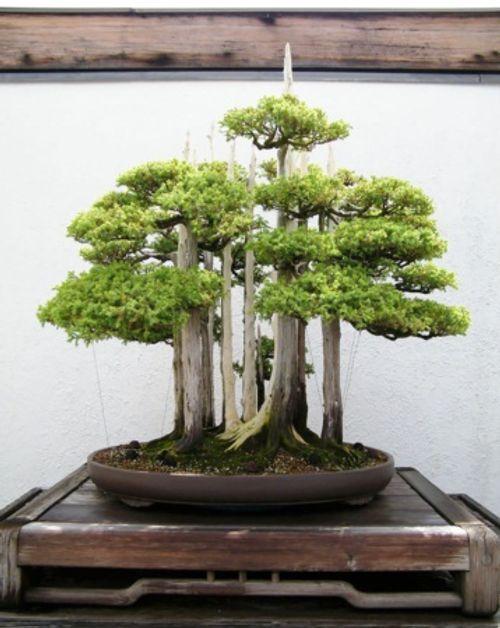 Ngất ngây trước những kiệt tác Bonsai nổi tiếng thế giới - Ảnh 5