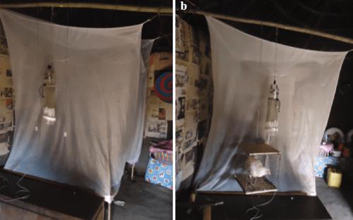 Hãy nhốt một con gà trong phòng ngủ nếu bạn muốn tránh xa bệnh sốt rét và vi-rút - Ảnh 2