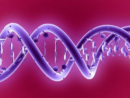 Phát hiện loại gen giúp điều trị bệnh tim và ung thư - Ảnh 1