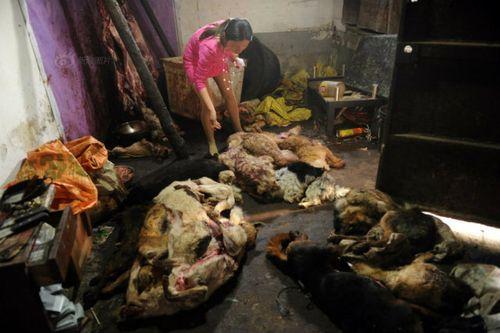Nhói lòng hình ảnh tại lò giết mổ chó ở Trung Quốc - Ảnh 1