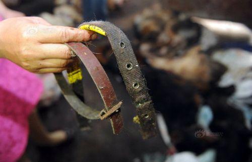 Nhói lòng hình ảnh tại lò giết mổ chó ở Trung Quốc - Ảnh 3