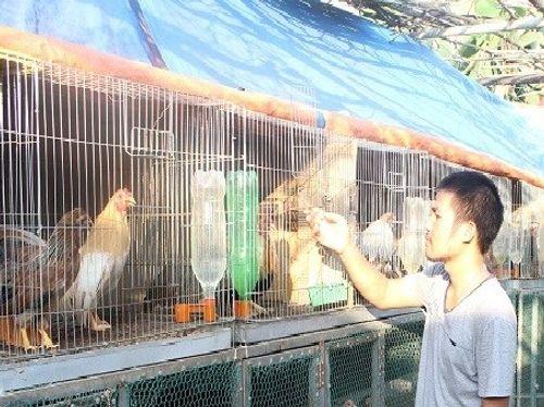 Trưởng phòng bỏ việc nuôi gà, thu gần 100 triệu/tháng - Ảnh 1