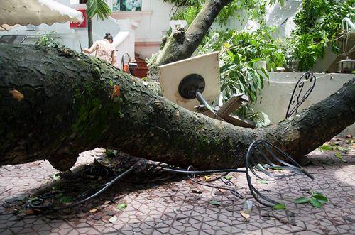 Hà Nội: Cành xà cừ lớn đổ vào nhà hàng sau cơn mưa - Ảnh 2