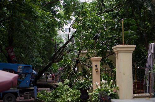 Hà Nội: Cành xà cừ lớn đổ vào nhà hàng sau cơn mưa - Ảnh 1