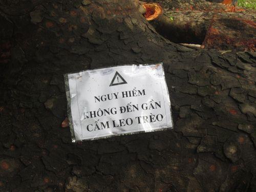 Ngổn ngang cây xanh phơi gốc trong công viên Bách Thảo - Ảnh 3
