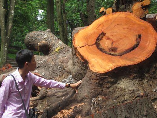 Ngổn ngang cây xanh phơi gốc trong công viên Bách Thảo - Ảnh 5