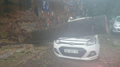 Hà Nội: Cây đổ la liệt đè bẹp dúm nhiều xe ô tô - Ảnh 4