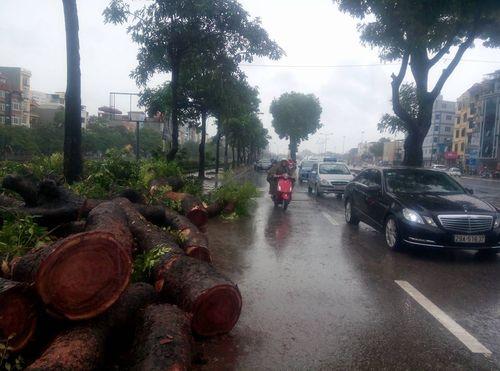 Gần 700 cây xanh Hà Nội gãy đổ do cơn bão số 1 - Ảnh 2