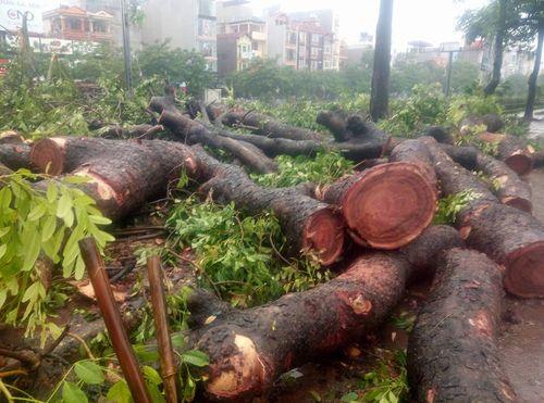 Gần 700 cây xanh Hà Nội gãy đổ do cơn bão số 1 - Ảnh 1