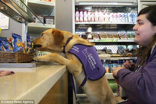 Chú chó thông minh giúp chủ thay quần áo, trả tiền và bật ti vi - Ảnh 6