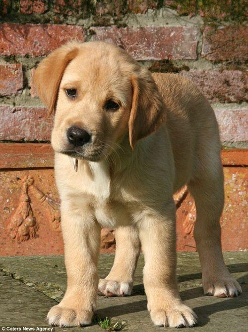 Chú chó thông minh giúp chủ thay quần áo, trả tiền và bật ti vi - Ảnh 9