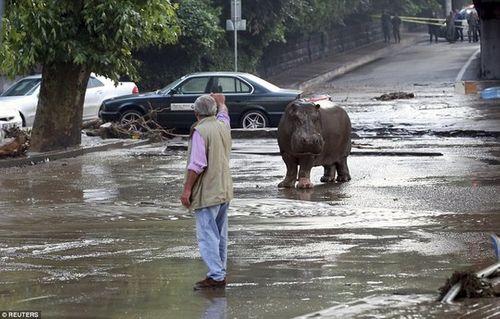 Náo loạn vì sư tử, cá sấu đi dạo trong thành phố sau lũ quét - Ảnh 1