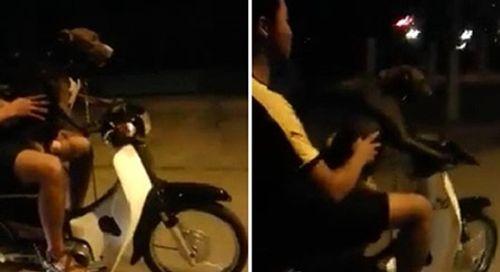 Hoảng hồn với clip nam thanh niên dạy chó lái xe - Ảnh 1