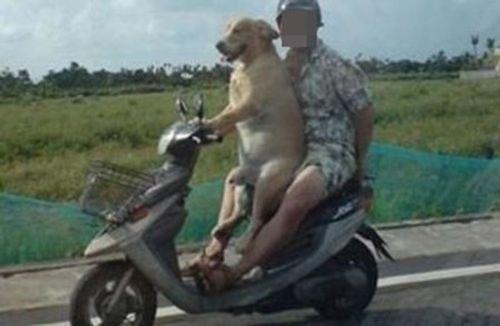 Hoảng hồn với clip nam thanh niên dạy chó lái xe - Ảnh 3