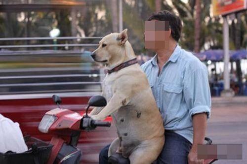 Hoảng hồn với clip nam thanh niên dạy chó lái xe - Ảnh 4