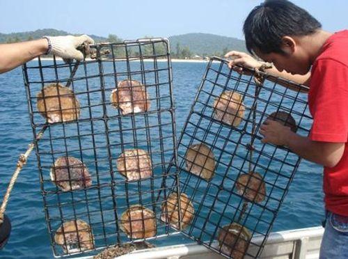 18 trải nghiệm tuyệt vời khi du lịch Phú Quốc - Ảnh 15