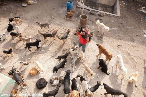 Chàng triệu phú lâm vào nợ nần vì cưu mang hàng trăm con chó - Ảnh 3