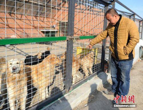 Chàng triệu phú lâm vào nợ nần vì cưu mang hàng trăm con chó - Ảnh 2