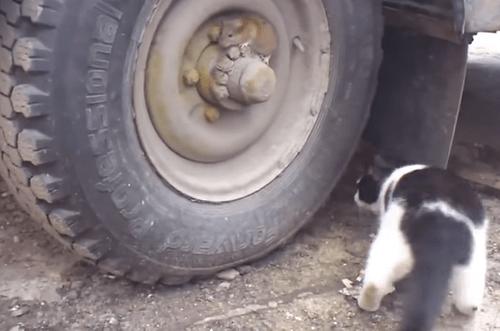 Video Tom và Jerry ngoài đời gây sốt cộng đồng mạng - Ảnh 1