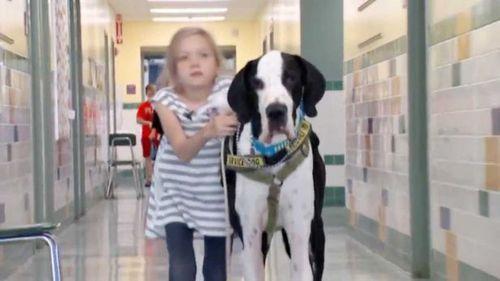 """Clip dễ thương với chú chó làm """"nạng di động"""" cho cô chủ nhỏ - Ảnh 1"""